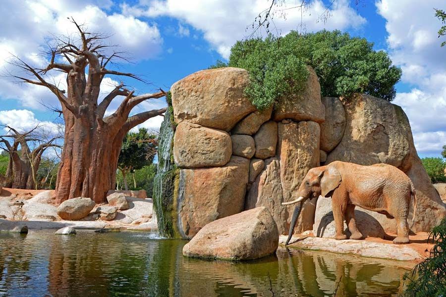Bioparc is an animal park or zoo in Valencia (Spain)