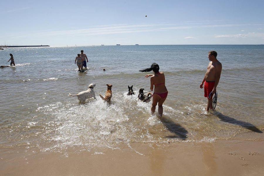Playas de Valencia ciudad: playa canina de Pinedo.